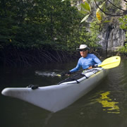 Kayaking in a mangrove forest